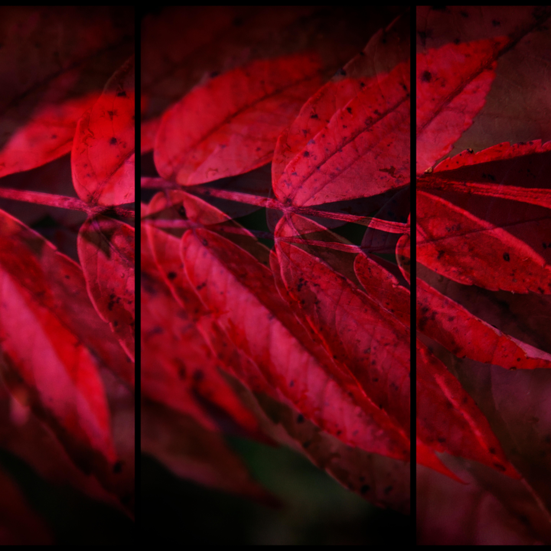 Red 3 xivzfq