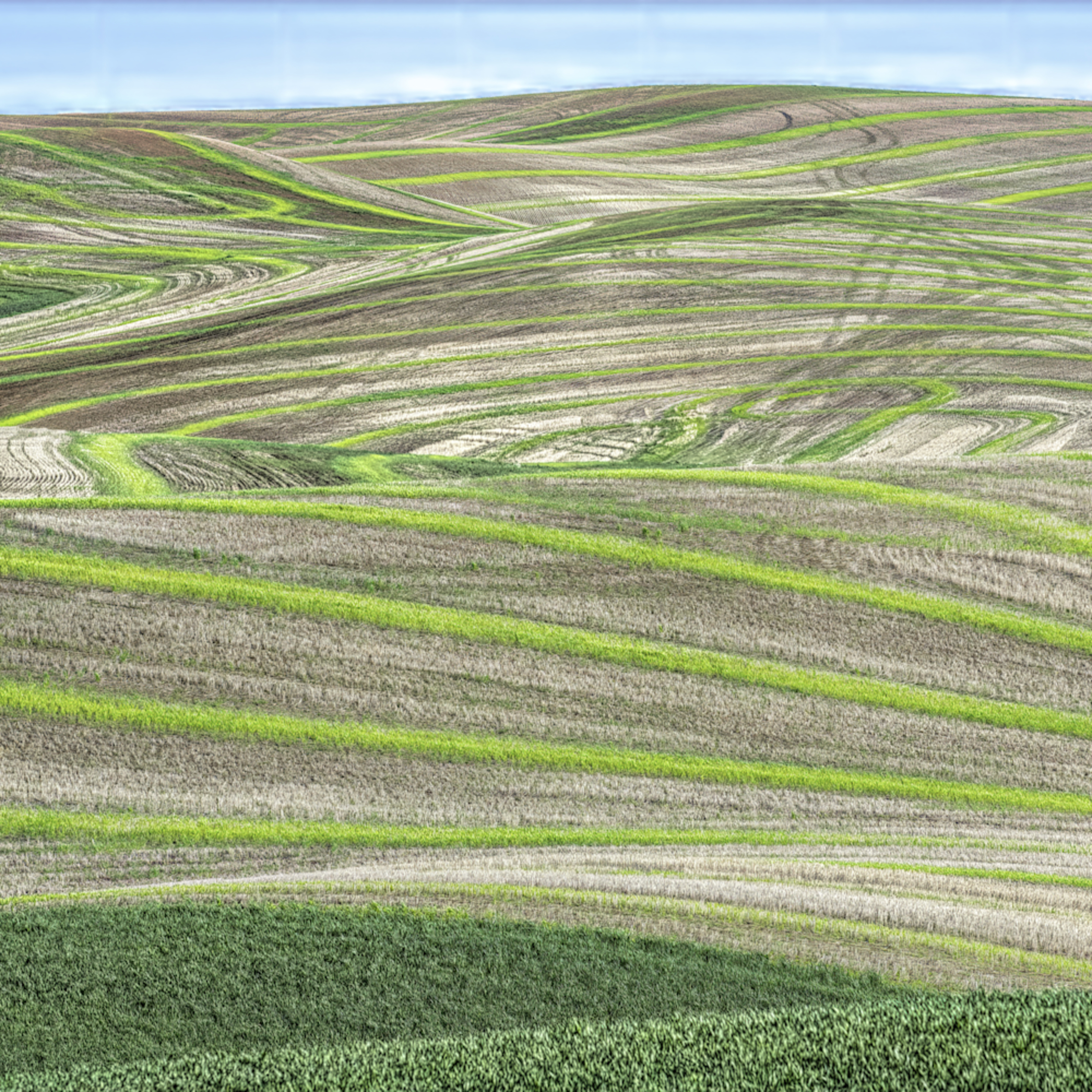 Delicate shades of palouse green rmx0fd
