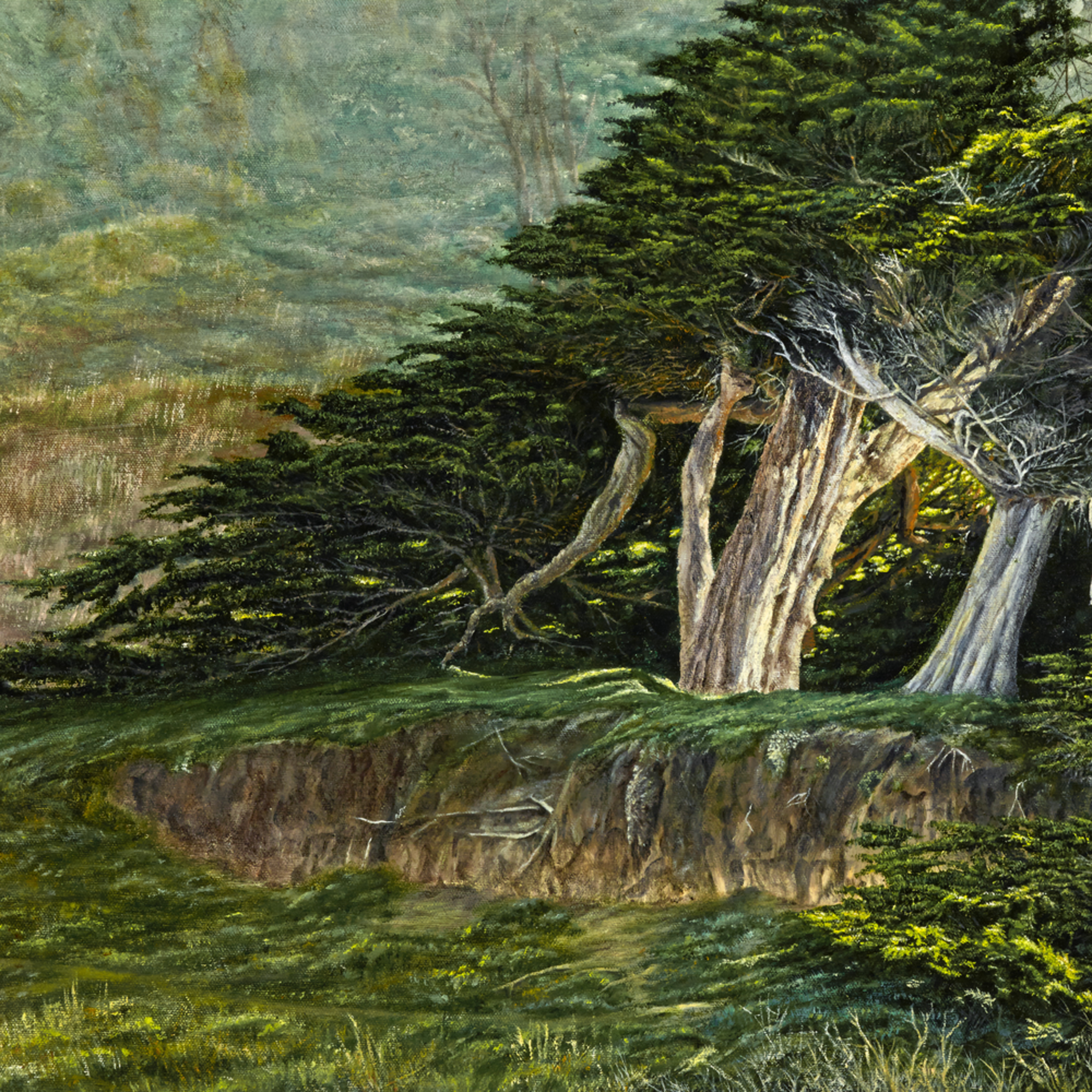 Cypress on the mendocino headlands asv62d