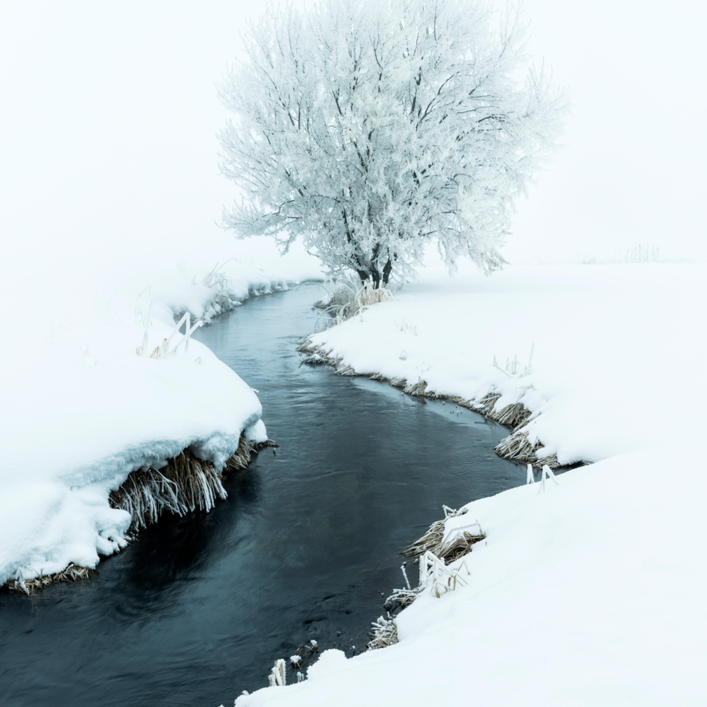 Winter tree in the fogfaa anyljw