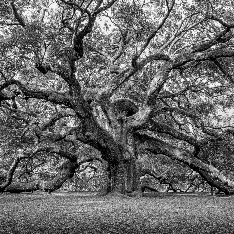 Angel oak 02 fztvaw
