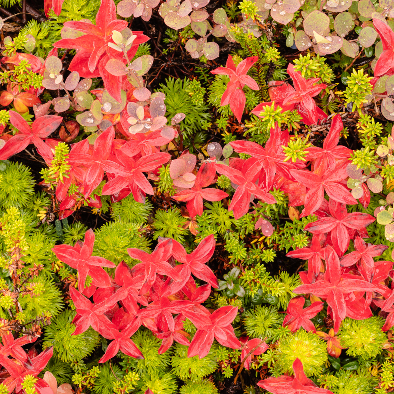 20190831 tundra flora dsr0471 artstorefronts n71bps
