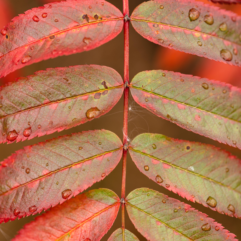 20190907 autumn foliage dsr0651 artstorefronts f8ncjv