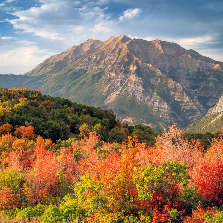 Timp with fall color asf njrkda