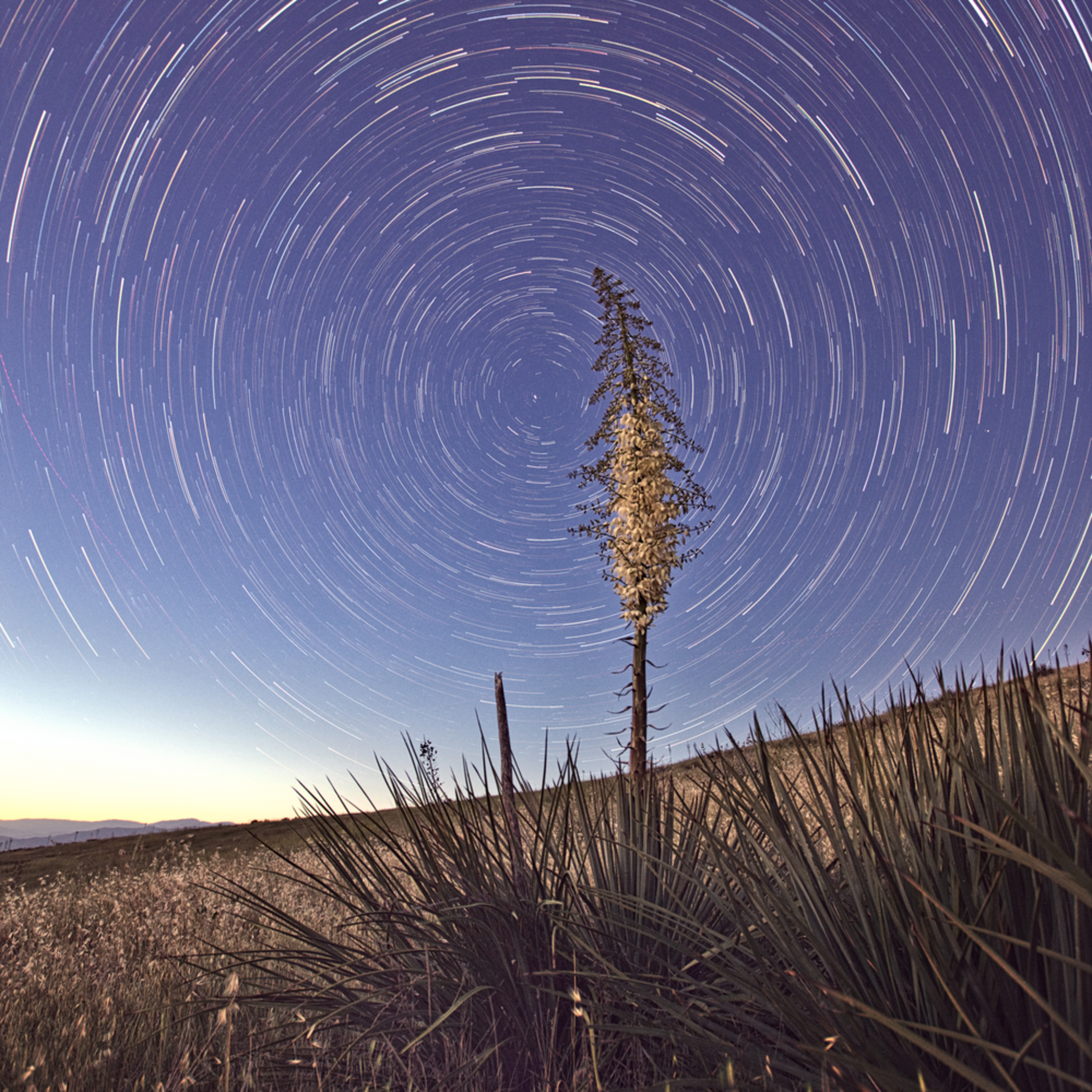 Star trails over yucca blossom afuxzr