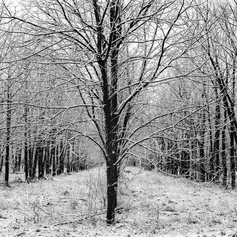 Harmony tree grove 4136fs srsuds