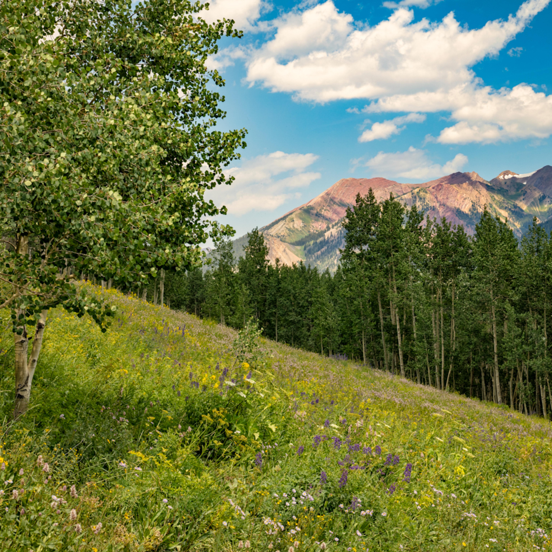 Snodgrass trail flowers mountains 7097fs utbpvp