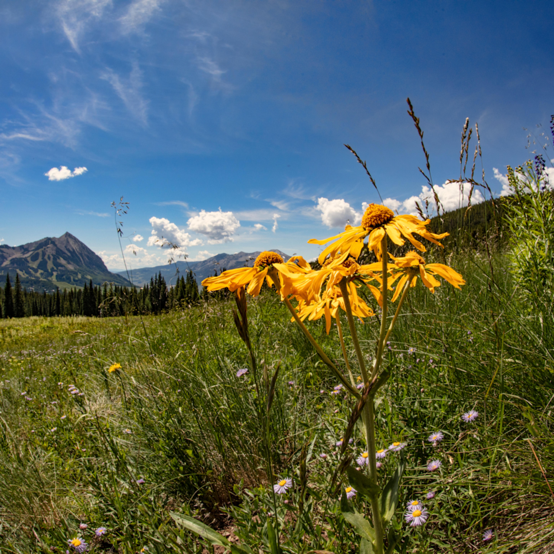 Snodgrass trail wildflowers dfe2 6937cfs vyf2ot