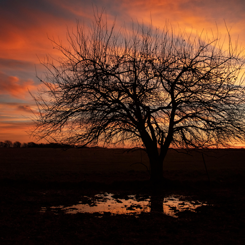 Carthage missouri lone tree sunrise4551 fss ve4ryj