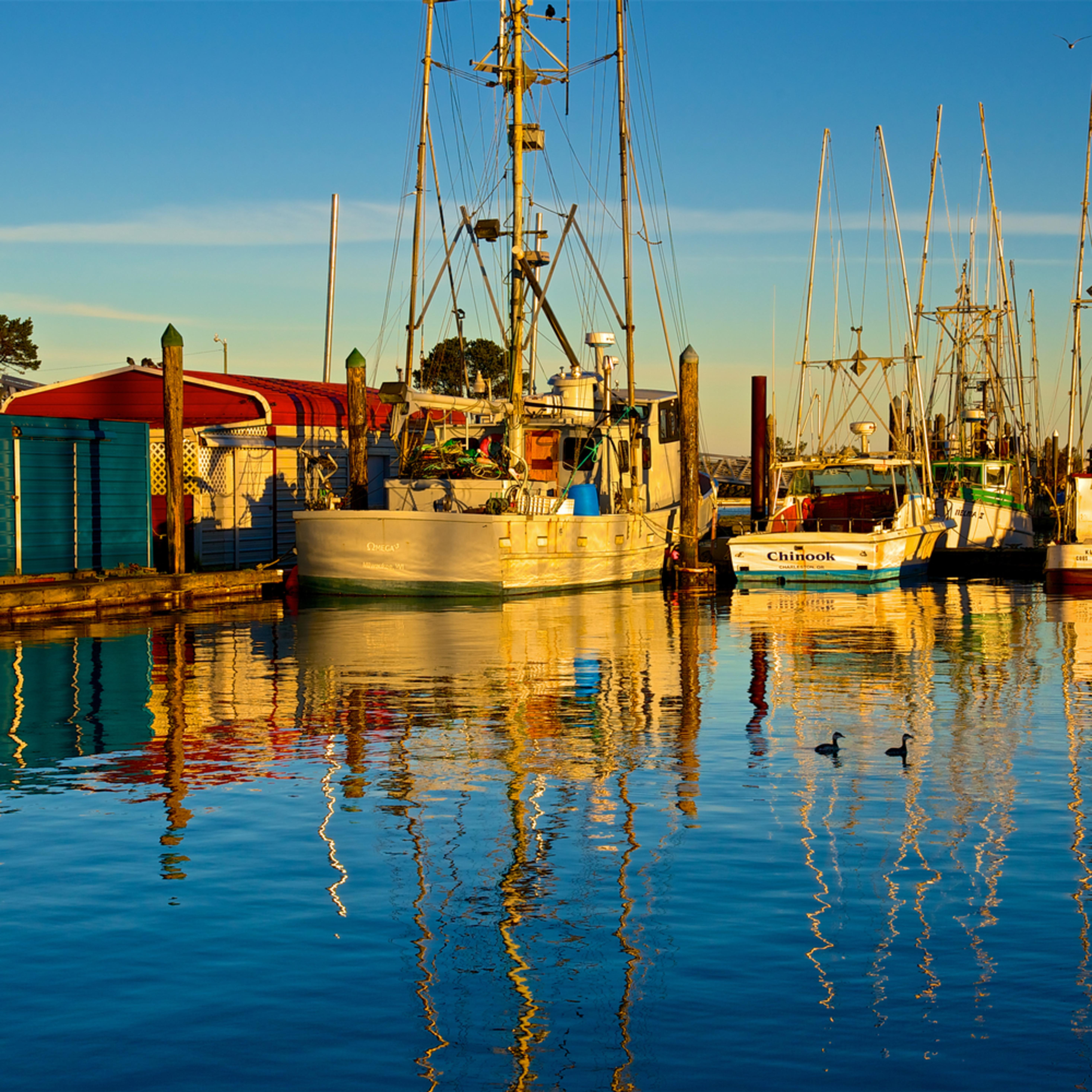 Charleston fishing boats birds oregon p4zerc