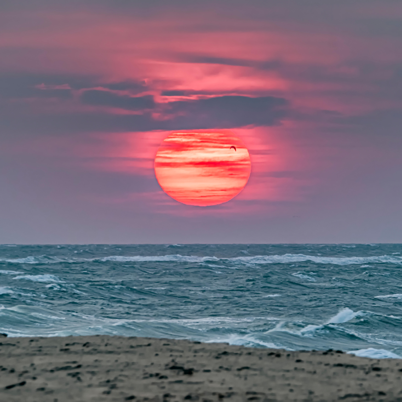 South beach fall sunrise and gull dtvtcb