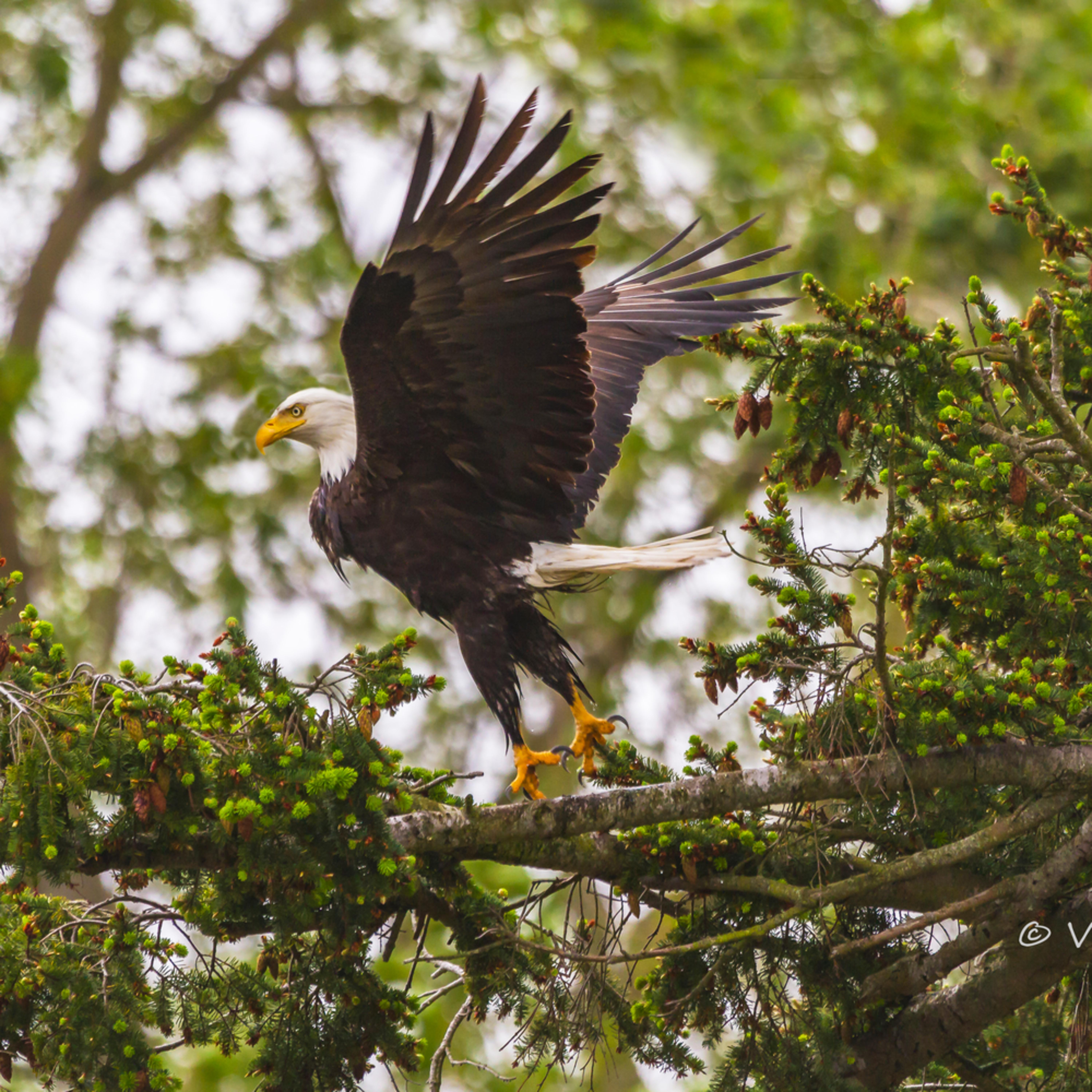 2010 may eagle invasion 0187 asf final eugn2u