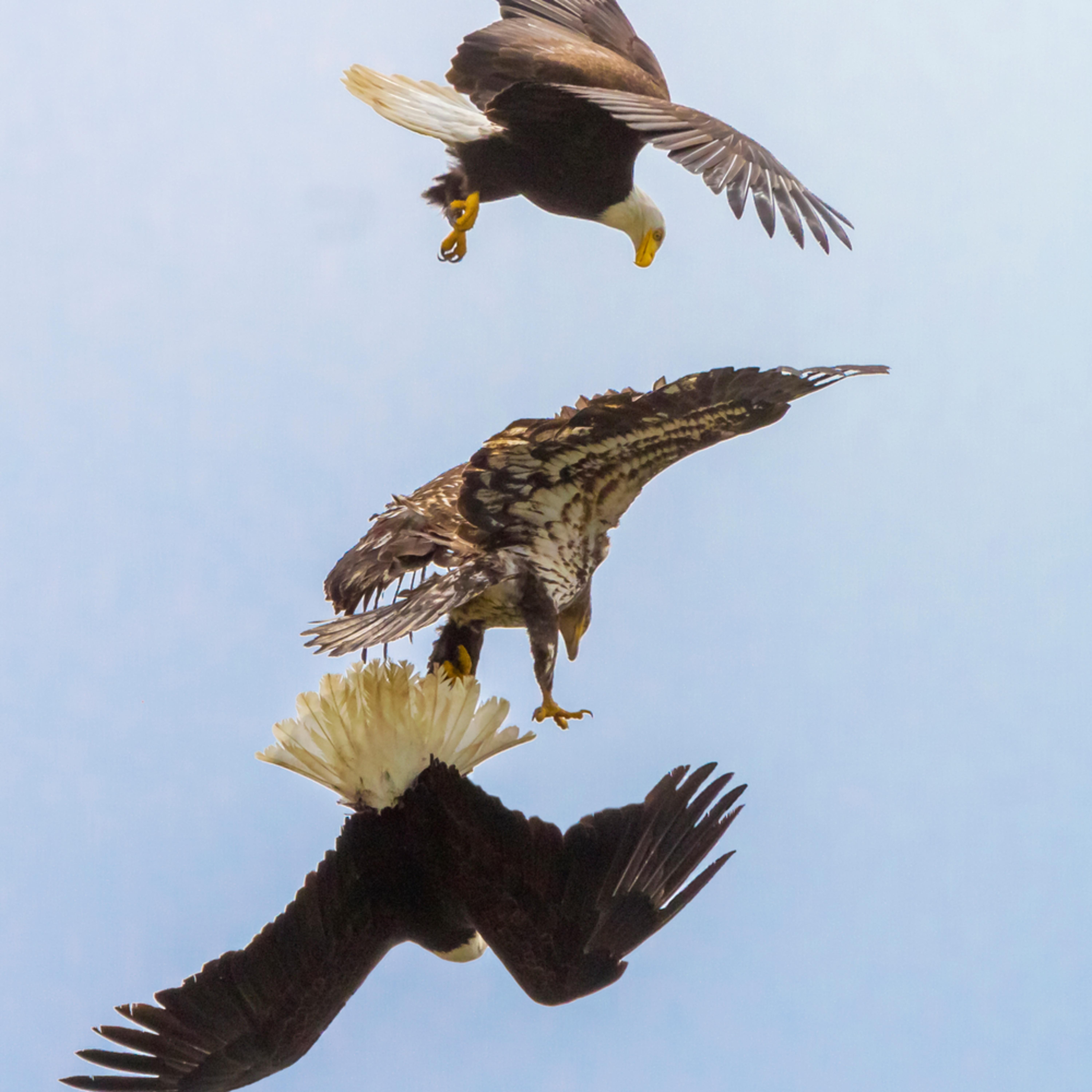 2010 may eagle invasion 0410 asf final n1rf0e