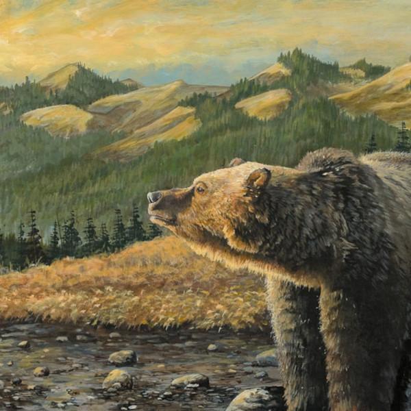 Bear lores hoa1vm