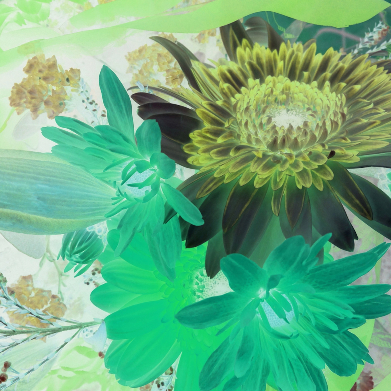 X ray flowers 16 cpci9q