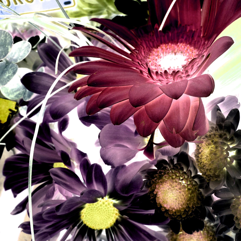 X ray flowers 2 uzaclc