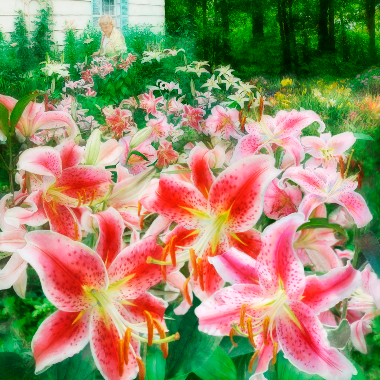 130302 ahern marys dream garden 20x24x300 ptejpj