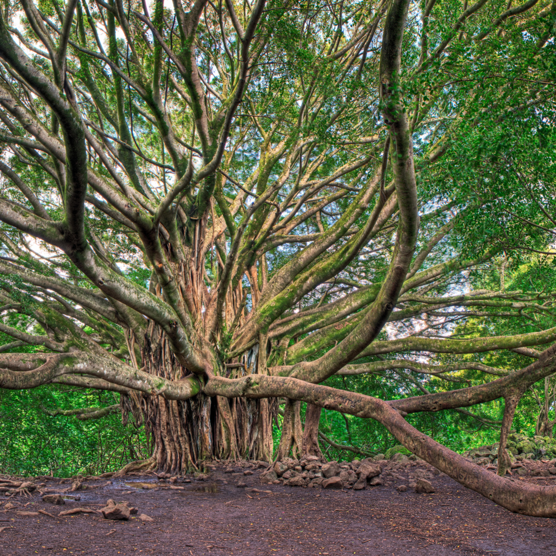 Branching outv4 znsmuy