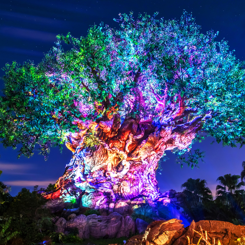 Tree of life awakenings qafxpg