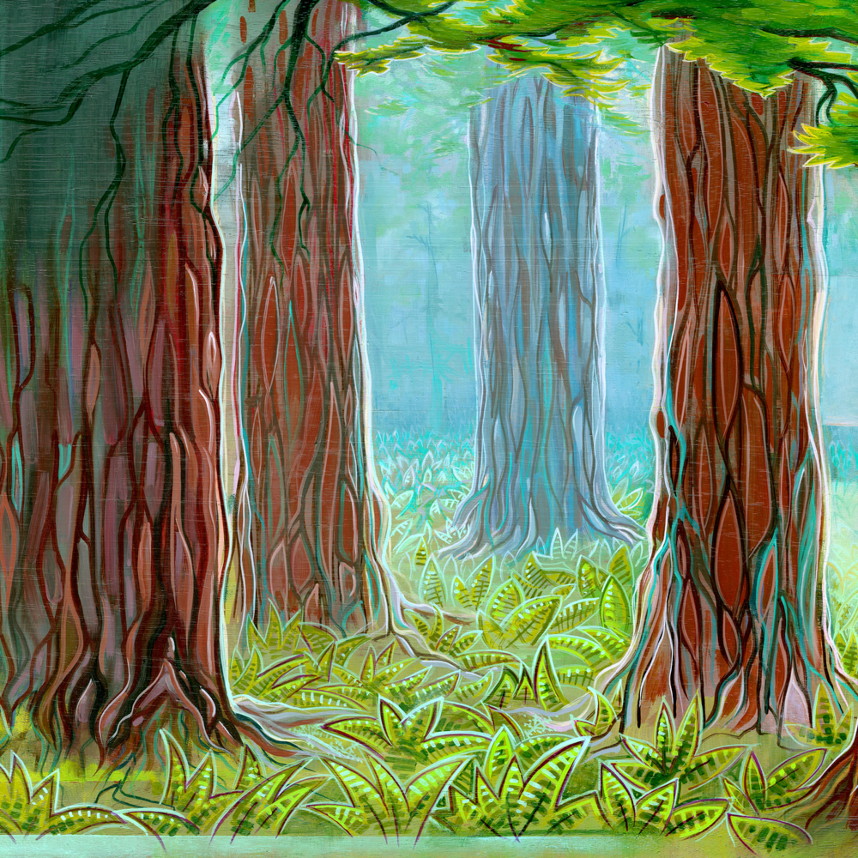 Redwoods soo7jq