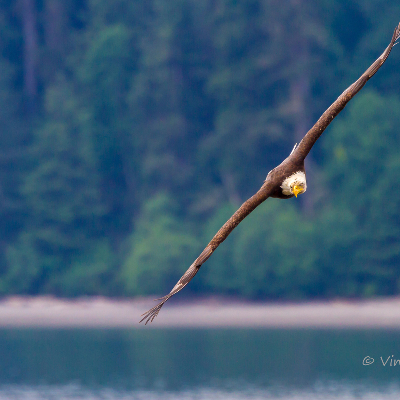 2010 may eagle asf final hurtwj
