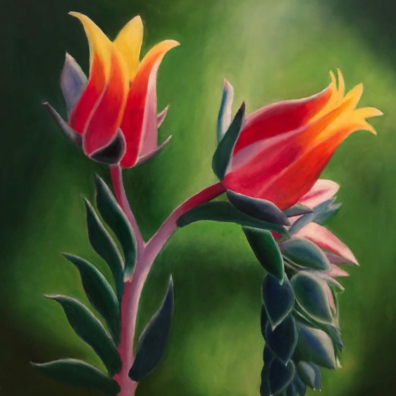 Tulip love zegism