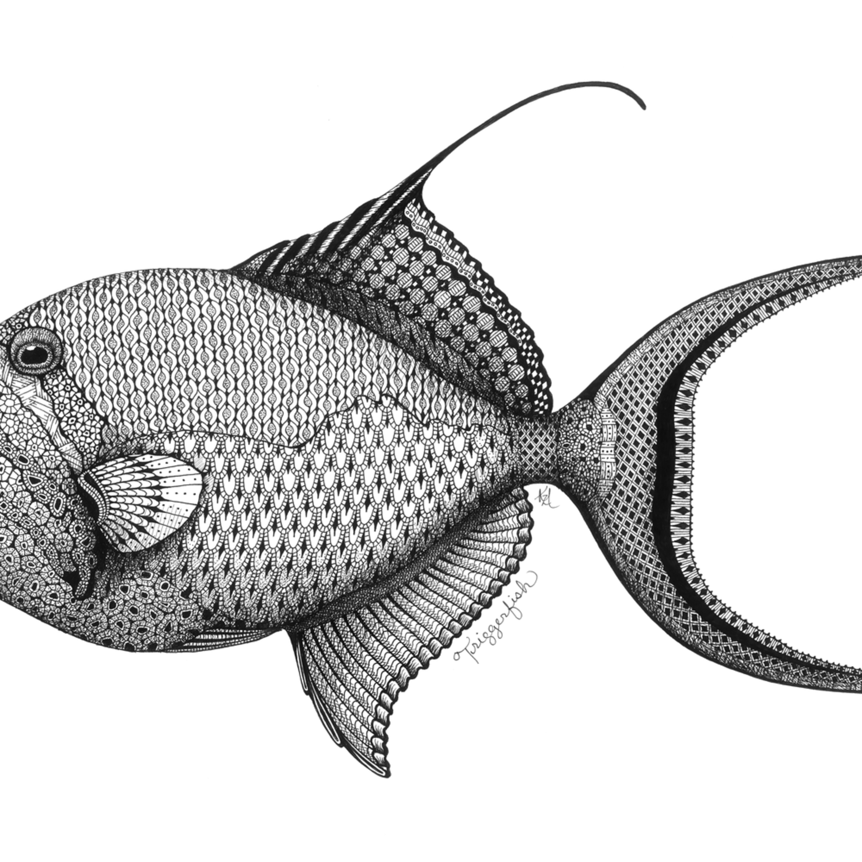 Triggerfish qymx6k