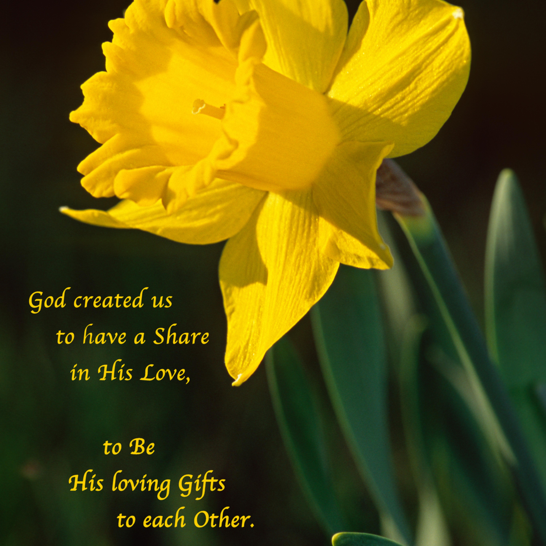 Daffodil a35q h73ixi