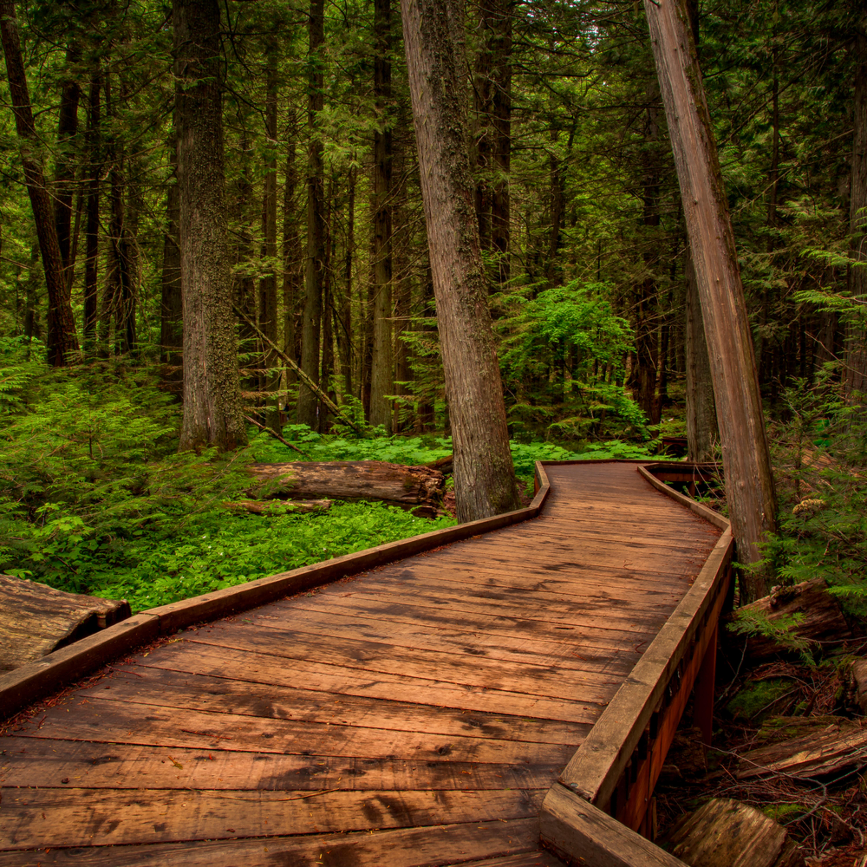 Trai of the cedars   glacier national park qdpynu