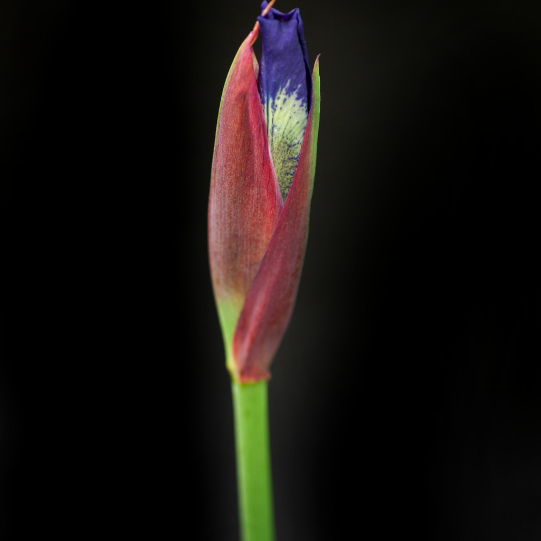 Iris 2 vwpwh4