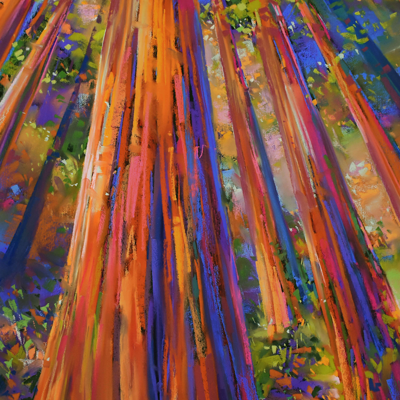 Redwoods up copy yk00ex