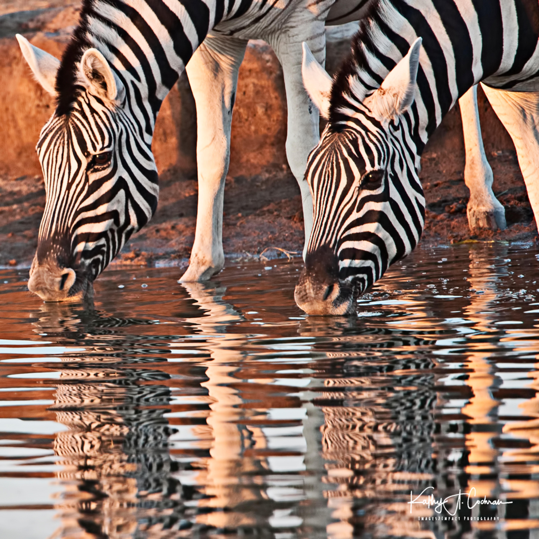 Reflections nisuae