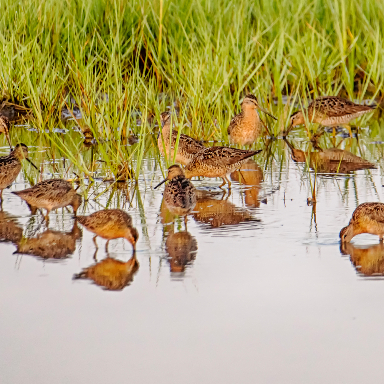 Sengekontacket sanderling panorama bpfztd