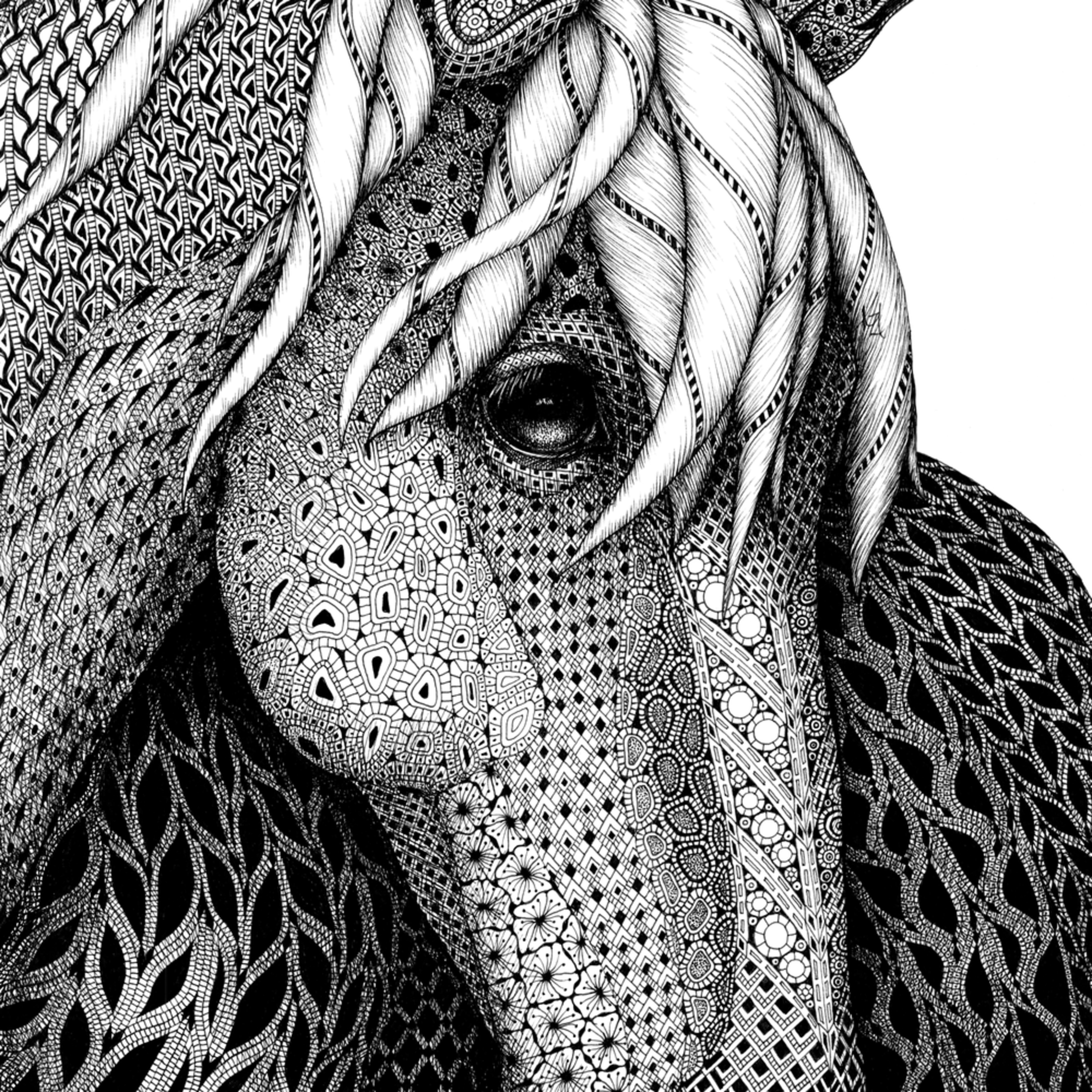 Horse portrait of a pony wtzq9l