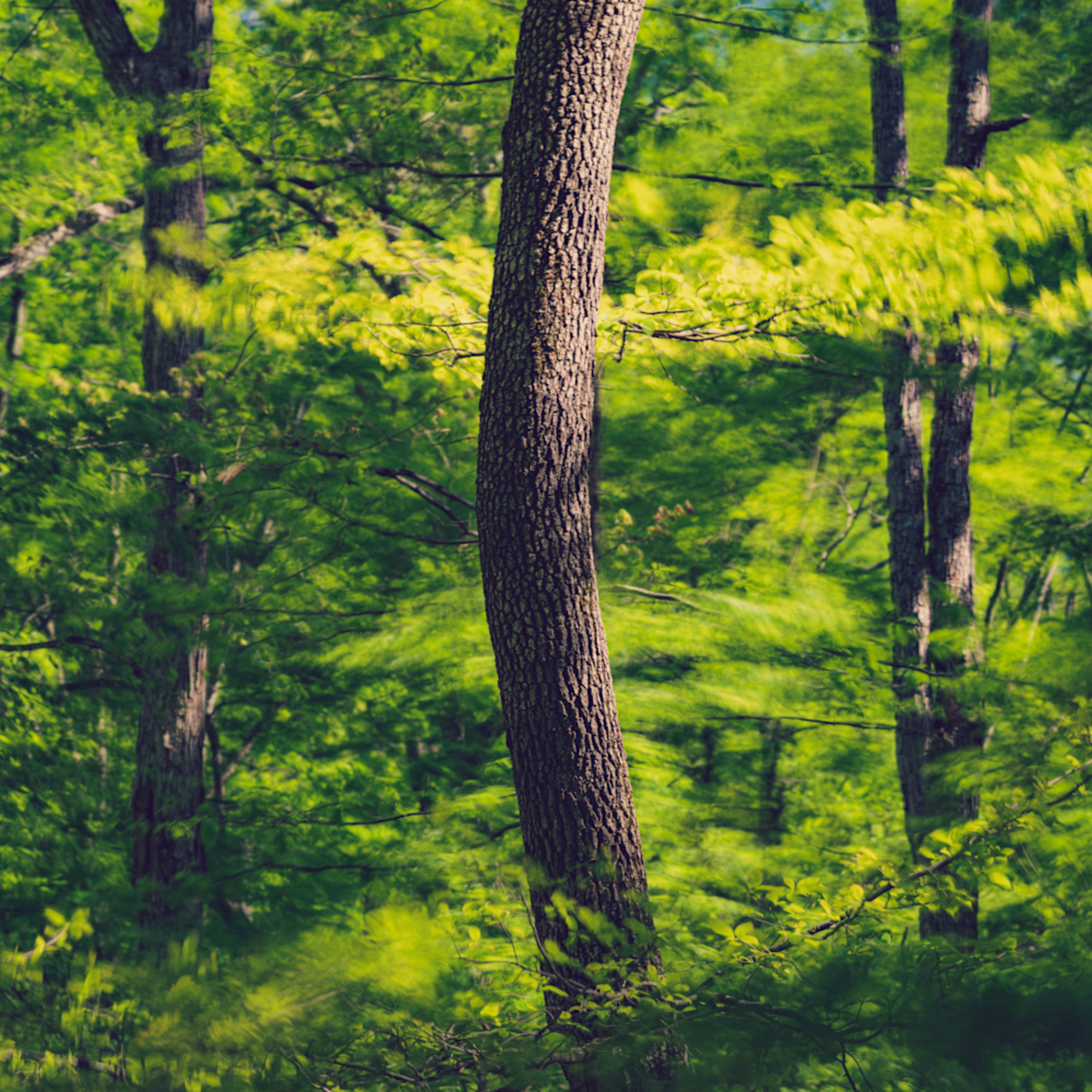 Nature color 0241 upwkpv
