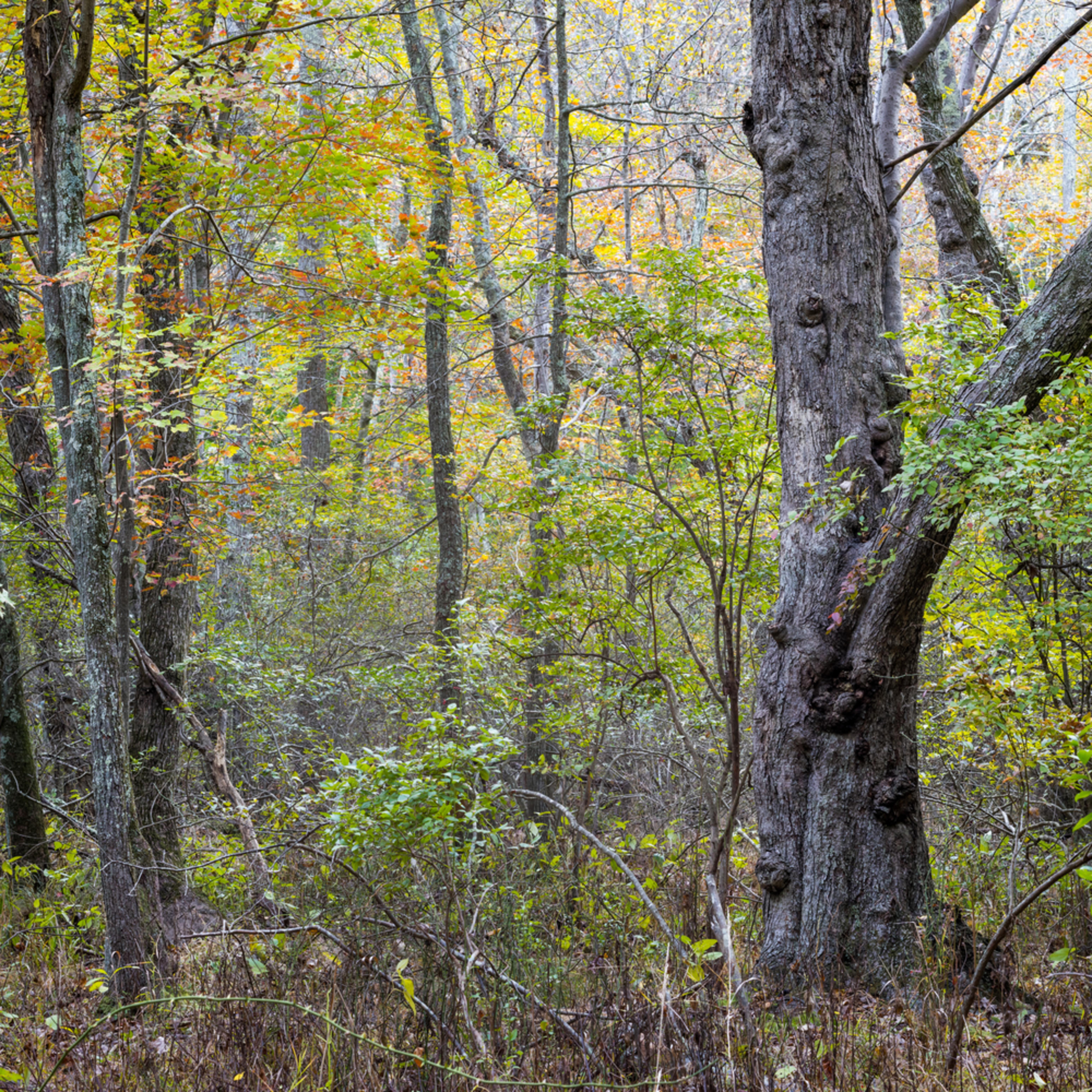 Nature color 1005 r7zaoi