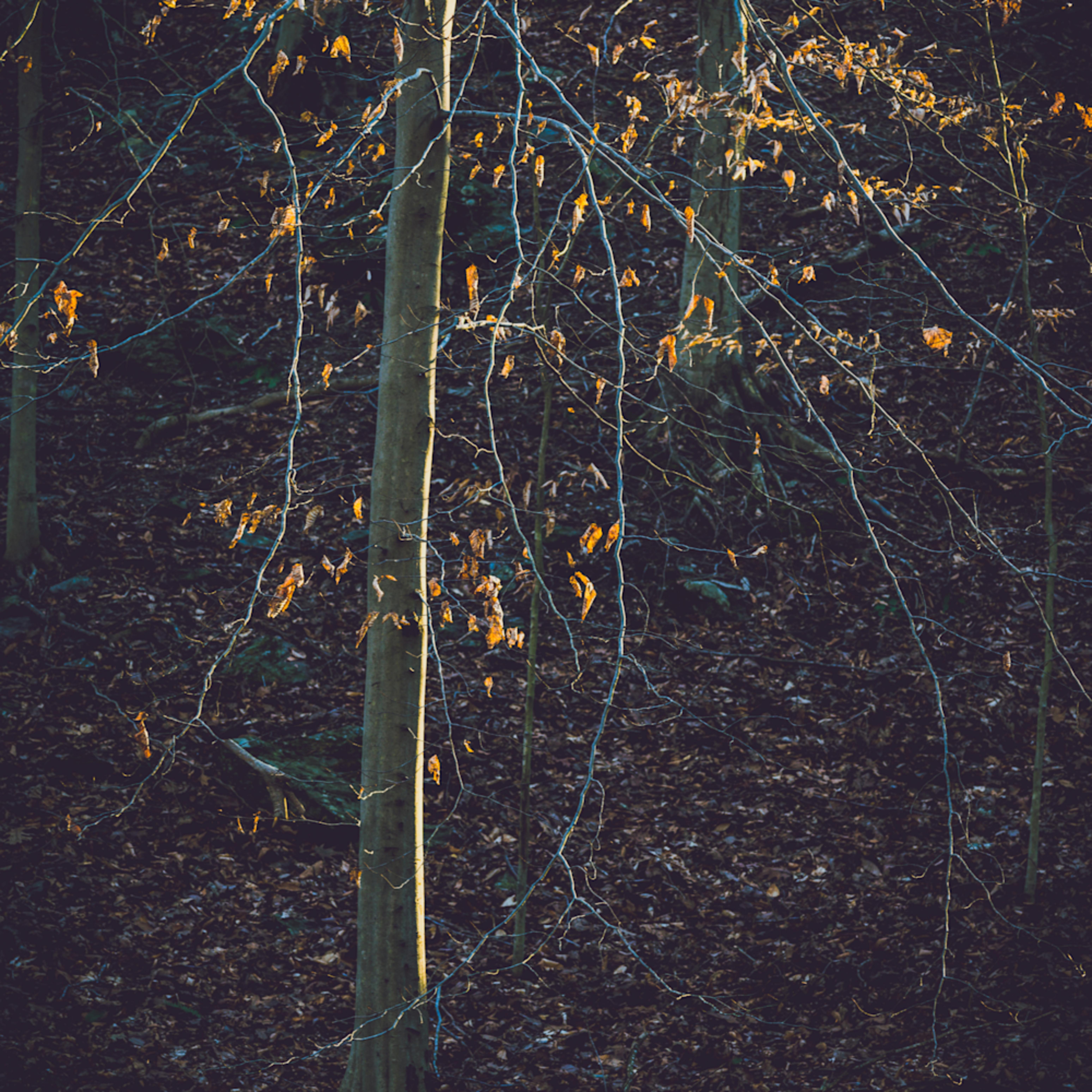 Nature color 5875 vyzahx