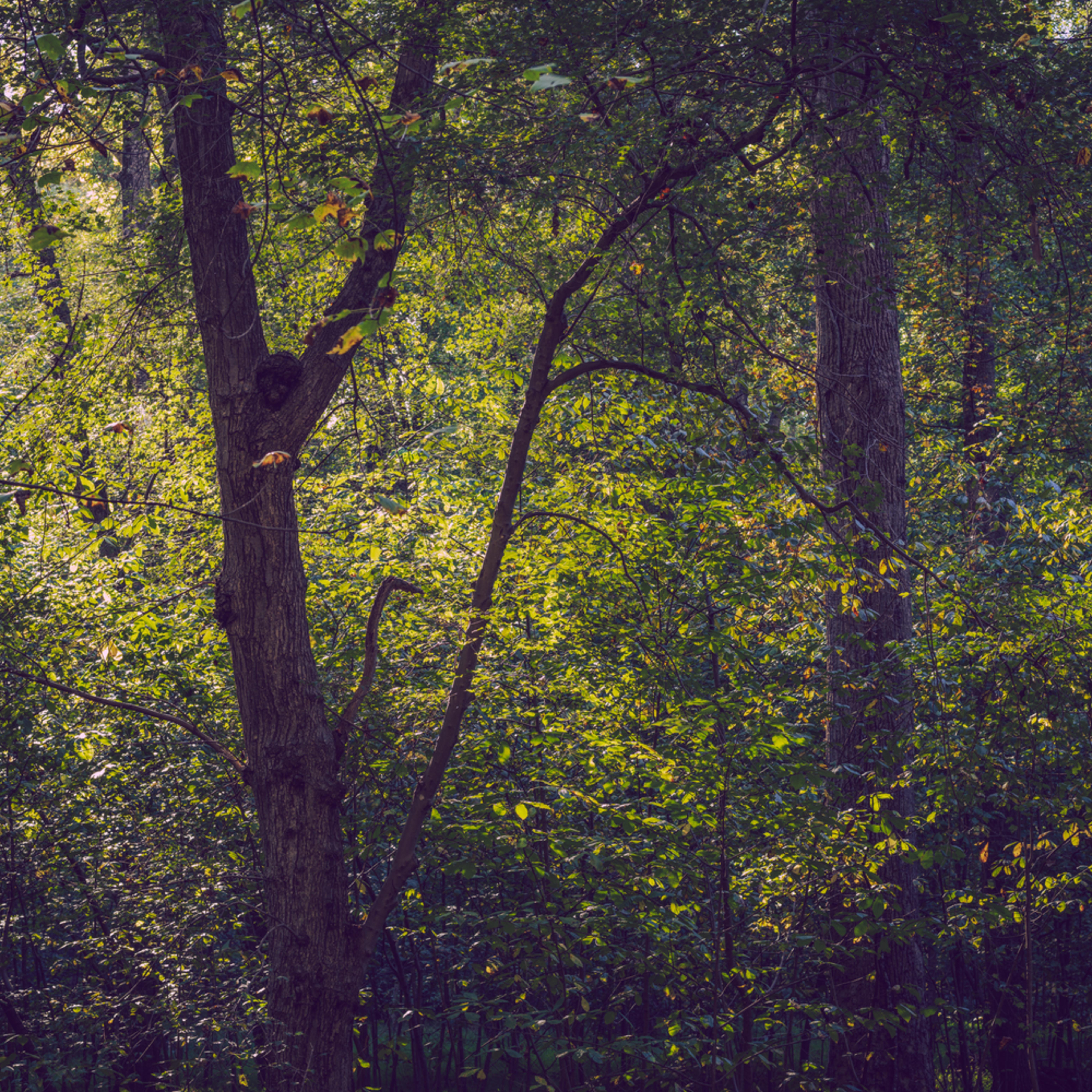 Nature color 9396 jua3rf