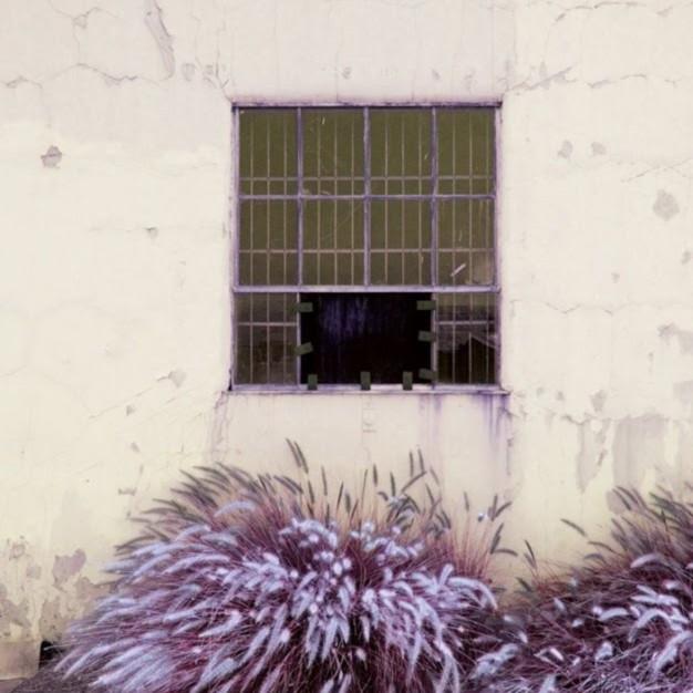 Window and weeds 2 iq9cuq
