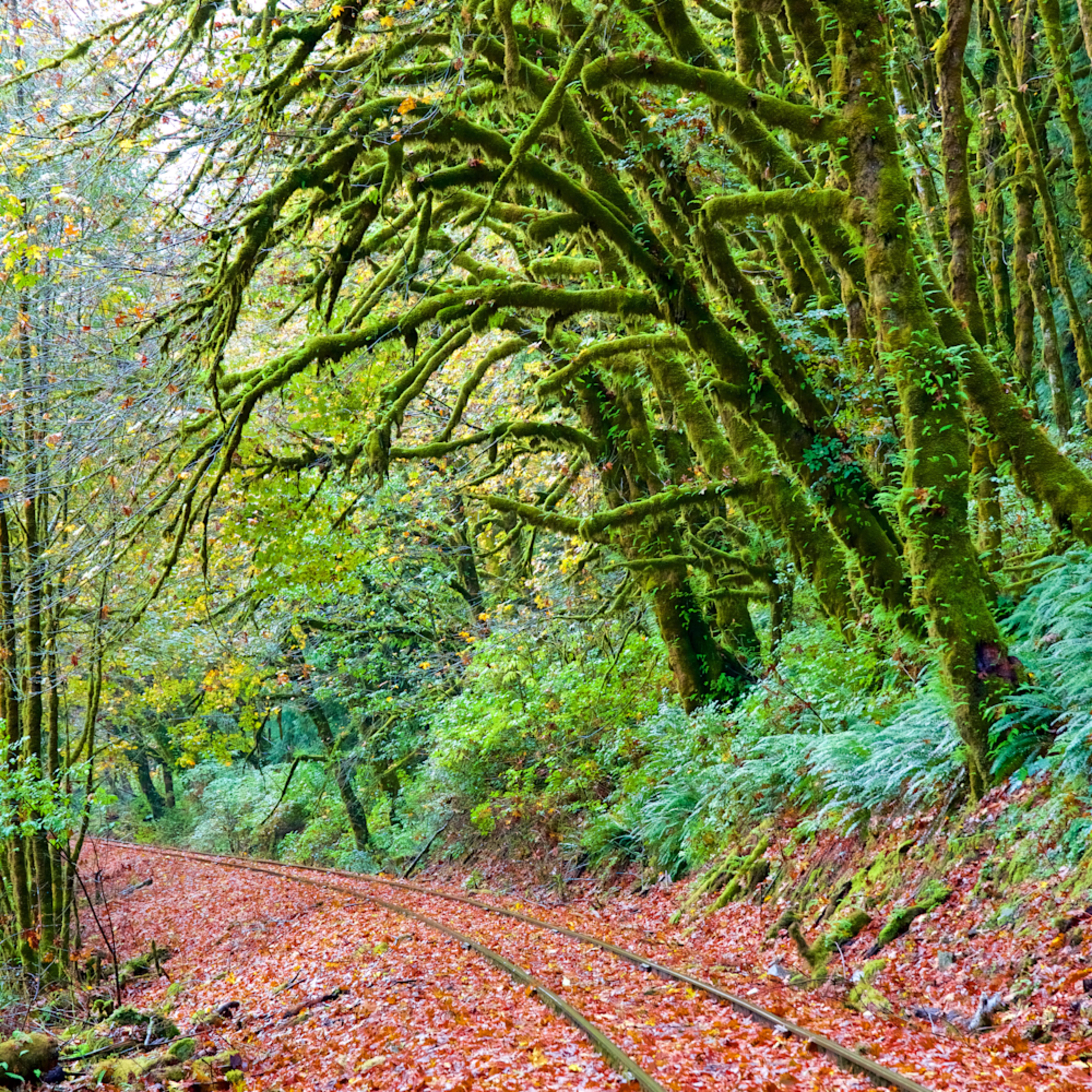 Oregon railroad tracks moss trees unp4hg