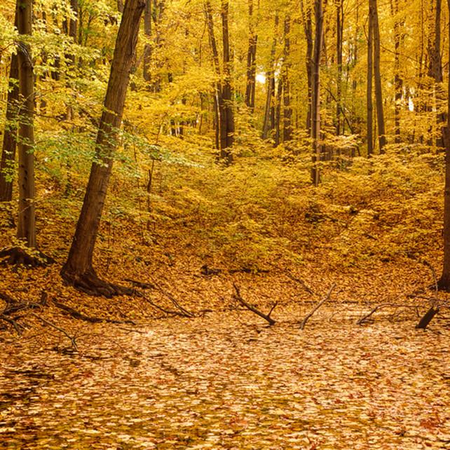 Autumn peak s2cf2m