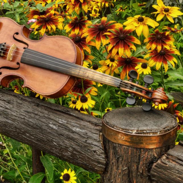 Garden strings for wm test hpncjf