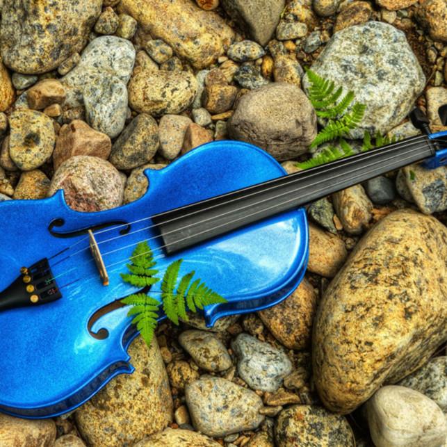 The blue violin wimqf5