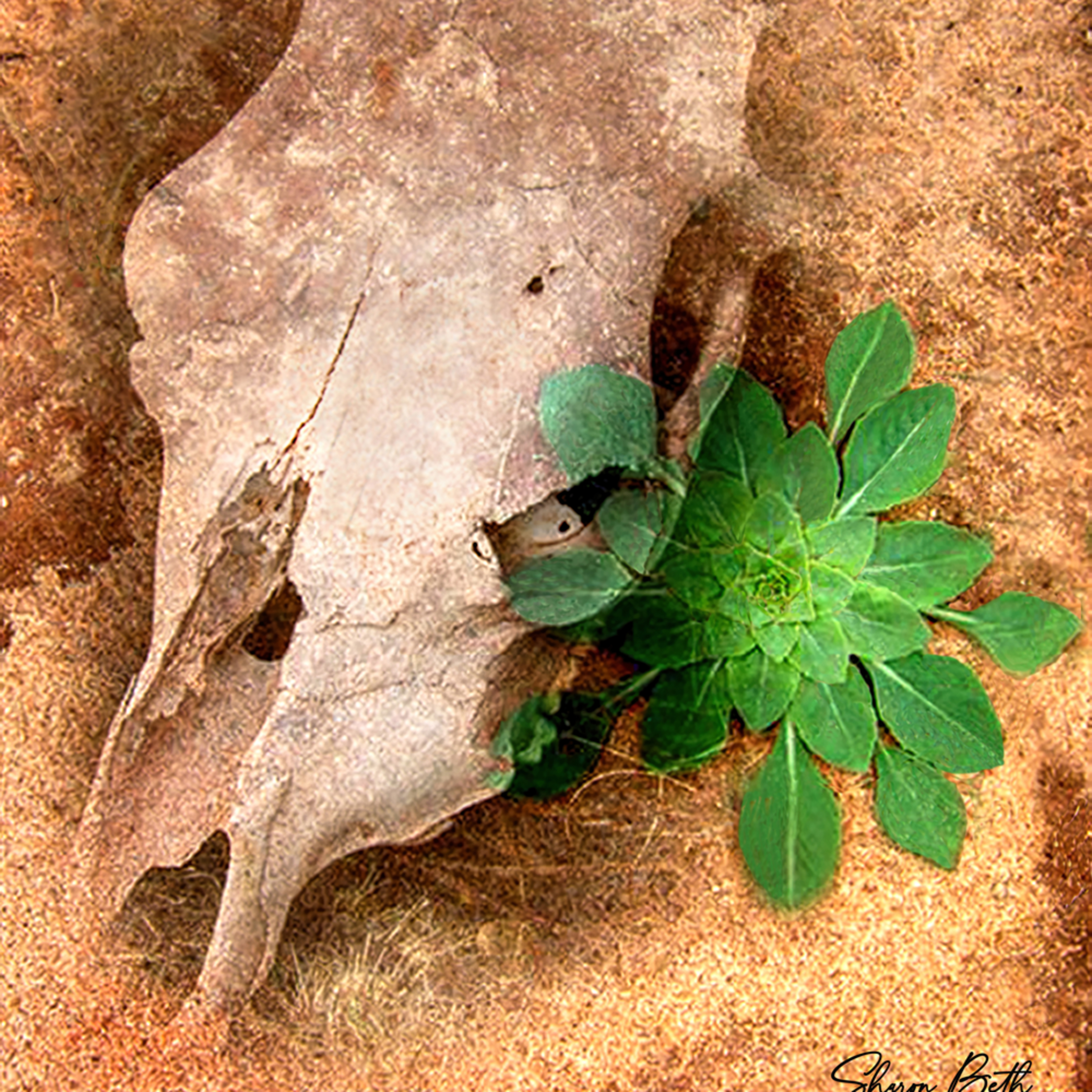 Cow skull and plant mdoijx fixed zaslr9