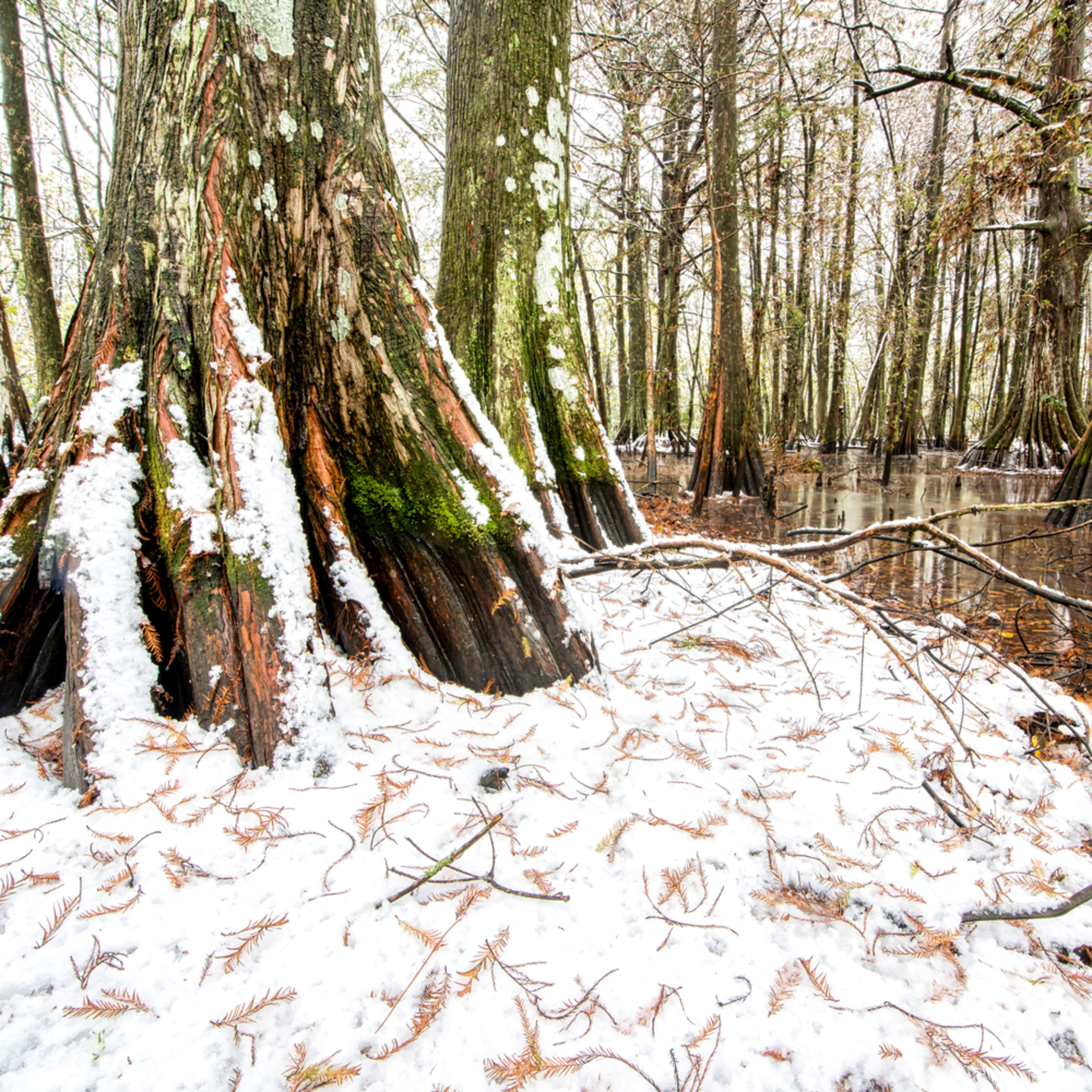 Andy crawford photography swamps 20171208 8 ftxttb