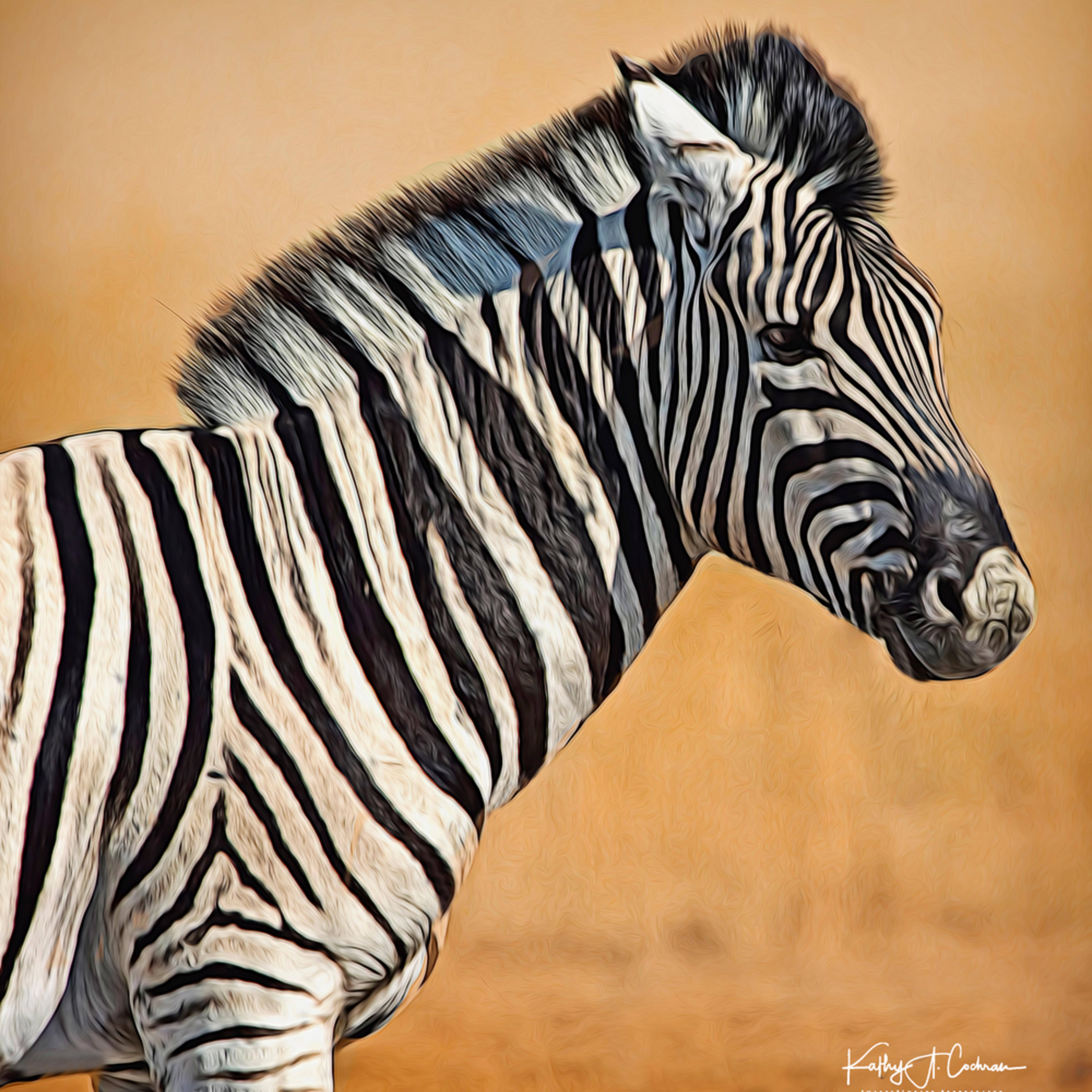 Zebra foal portrait ijoymq