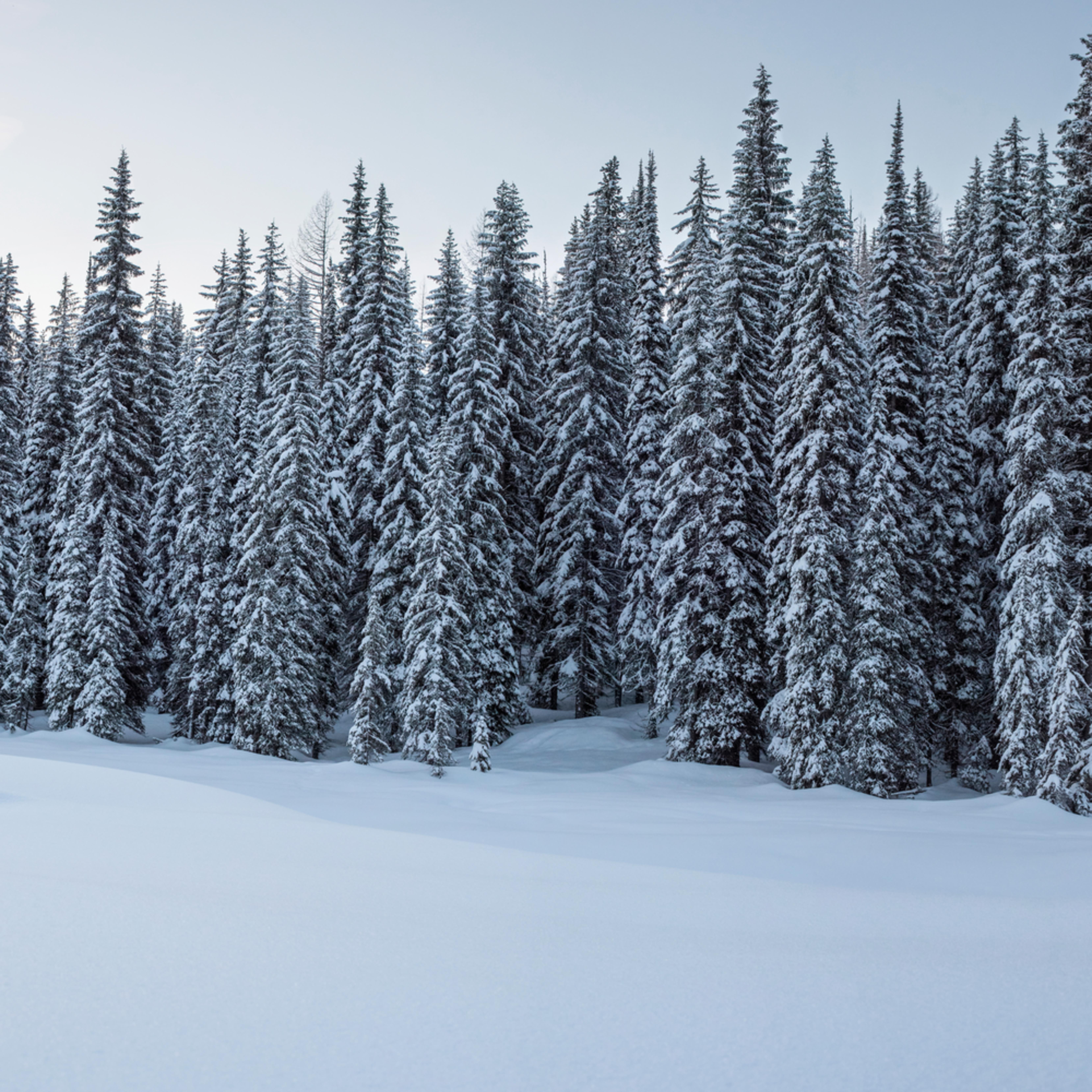 Lolo pass snowy trees p15nol