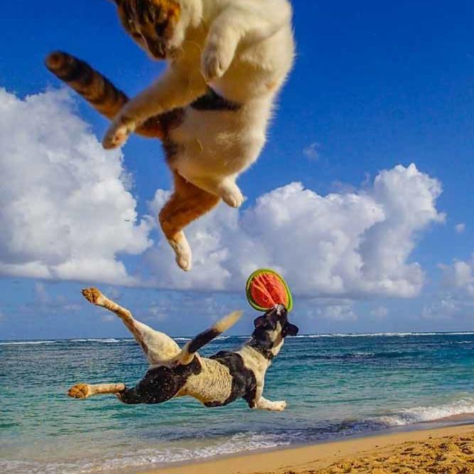 Jumping for joy nhdozz