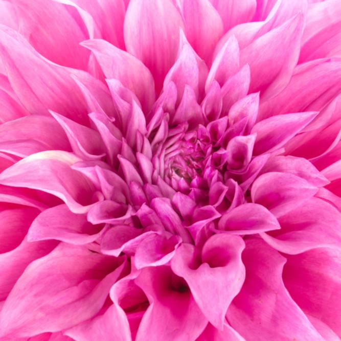 Flowers fine art abstract susan michal009 akzw2j