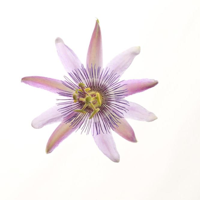 Flowers fine art color susan michal028 r2wout